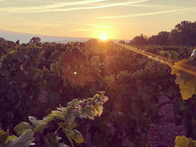 Debut des vendanges
